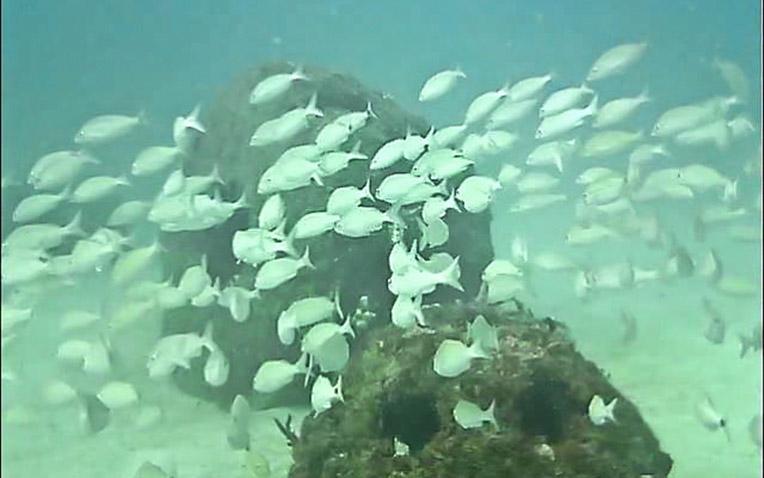 Eternal Reefs - 7-11-2011_041-1